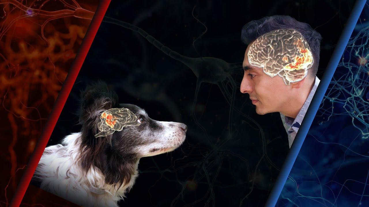 Câinii nu îți pot recunoaște fața, dar te consideră prieten din alte motive