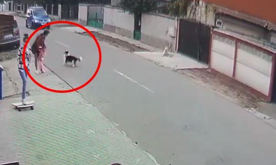 Un câine a băgat în sperieți mai mulți oameni în Valu lui Traian! VIDEO