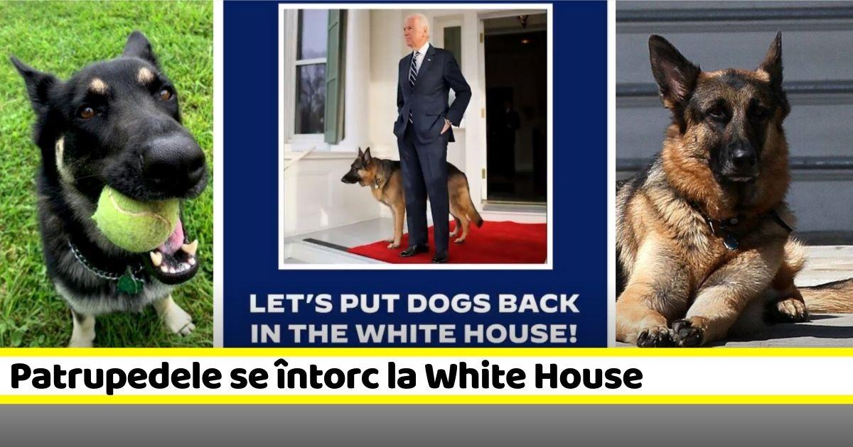 Alegerea lui Joe Biden marchează revenirea patrupedelor la White House