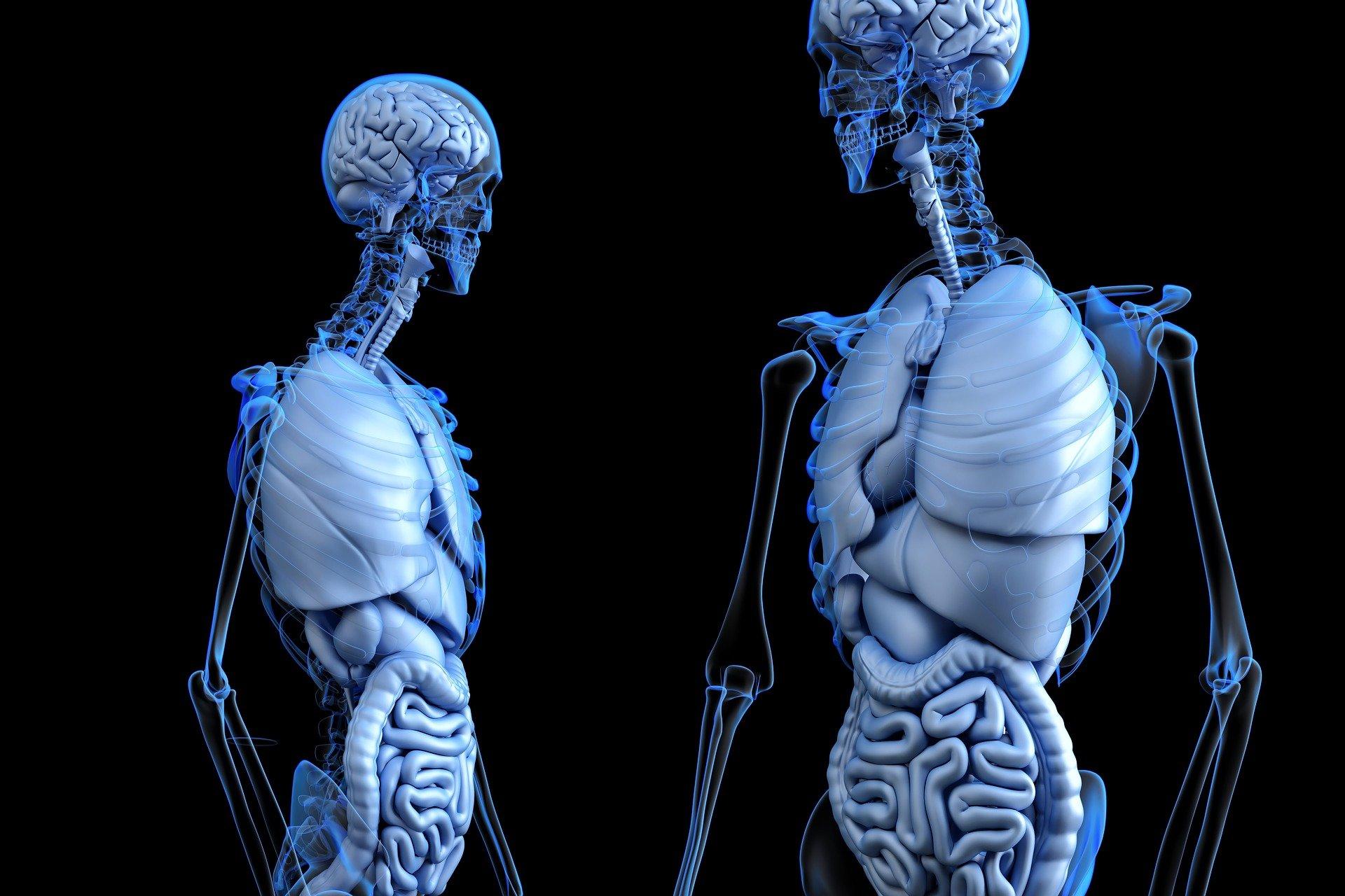 Rolul pe care evoluția oamenilor l-a avut în dezvoltarea funcțiilor organelor