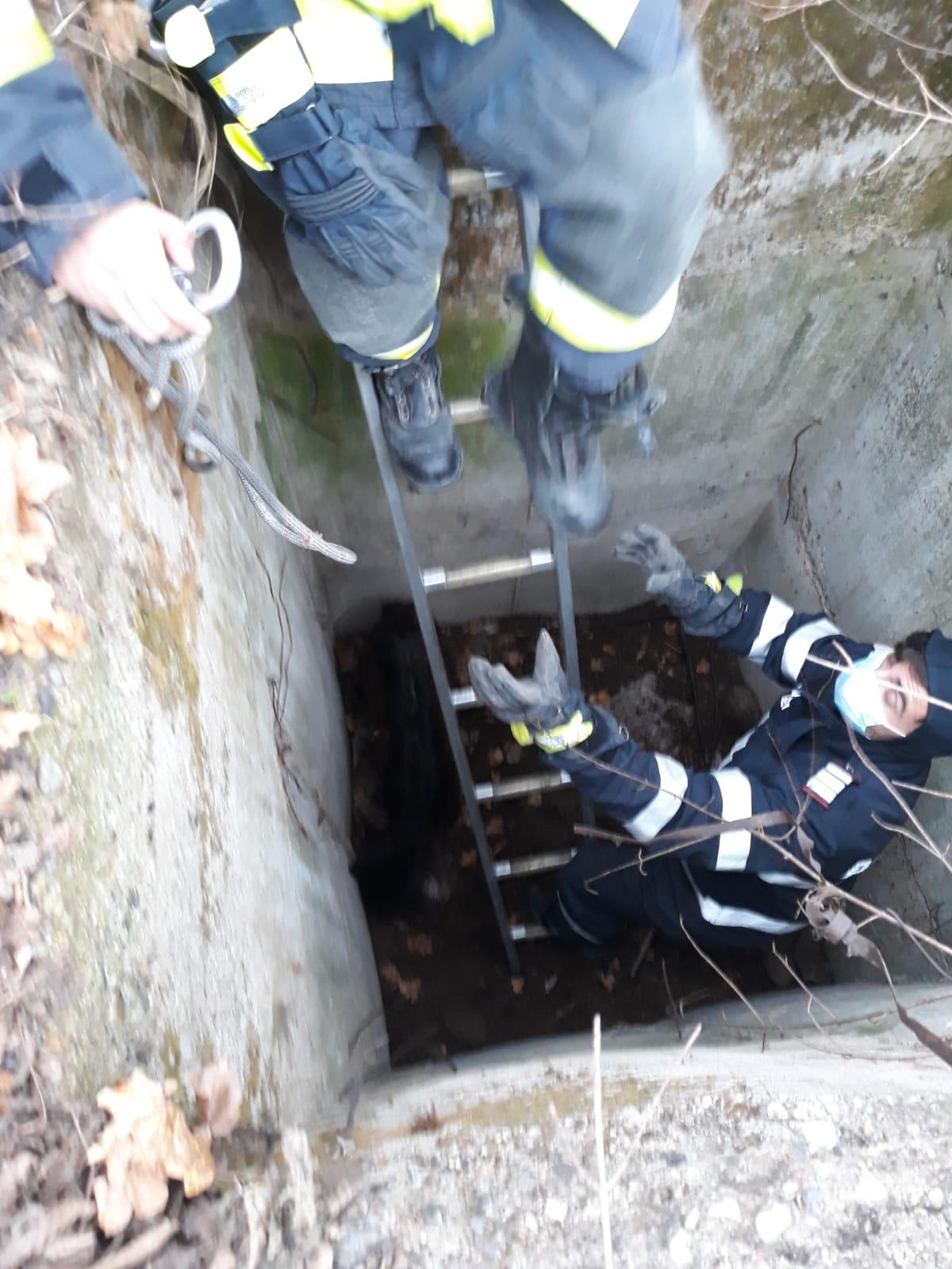 Vâlcea: Ied căzut într-un bazin din beton, salvat de pompieri -GDS