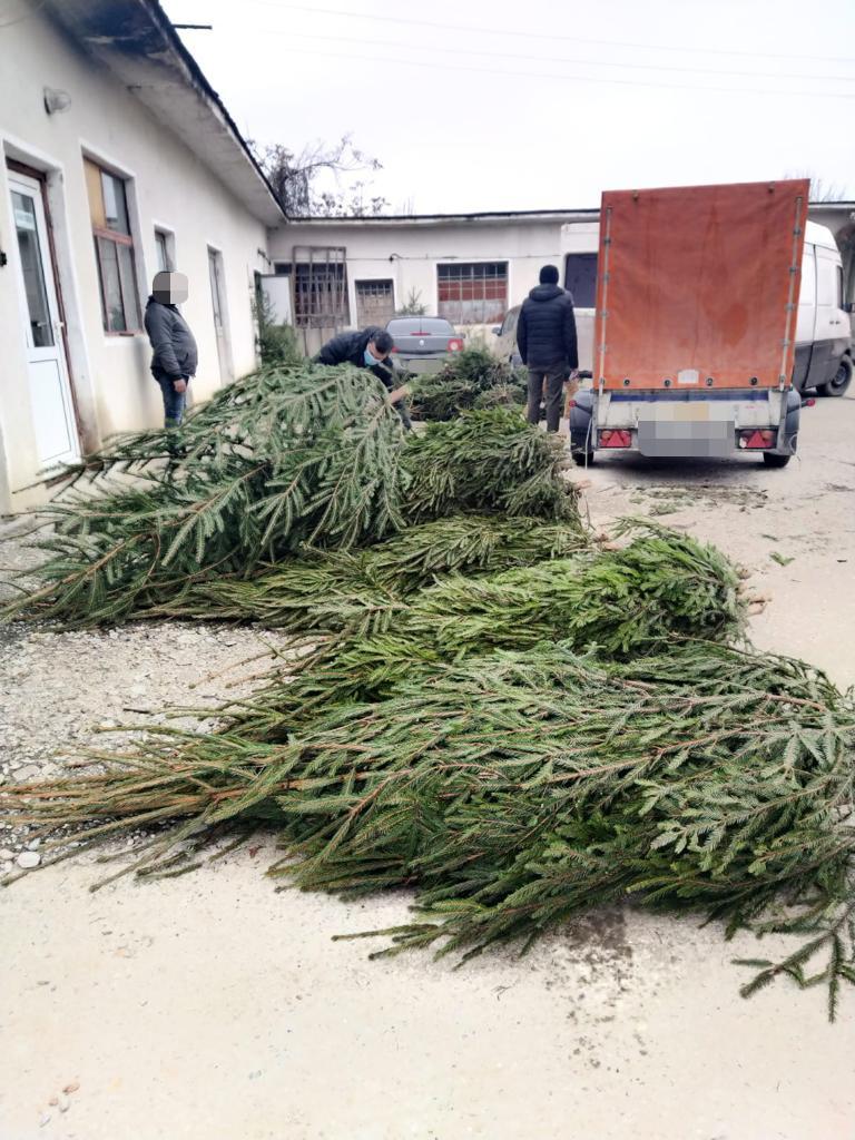 Vâlcea: Acțiuni pentru depistarea transporturilor ilegale de brazi de Crăciun