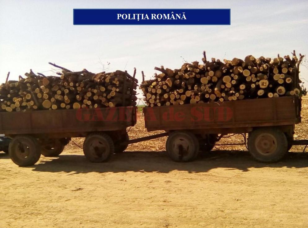 Olt: Combaterea transportului ilegal de material lemnos – GAZETA de SUD