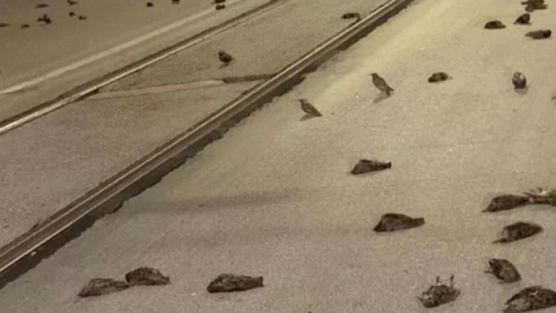 Mii de păsări au murit sau nu au mai putut zbura din cauza artificiilor din Roma. Imaginile îngrozitoare au făcut turul lumii