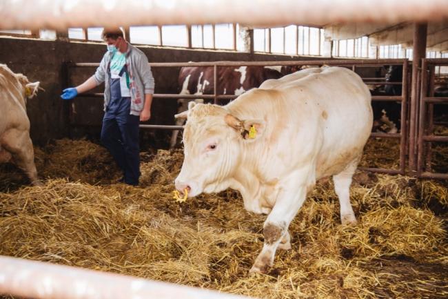 Liber la finanțare pentru construcția de abatoare mici pentru crescătorii de animale din Banatul montan