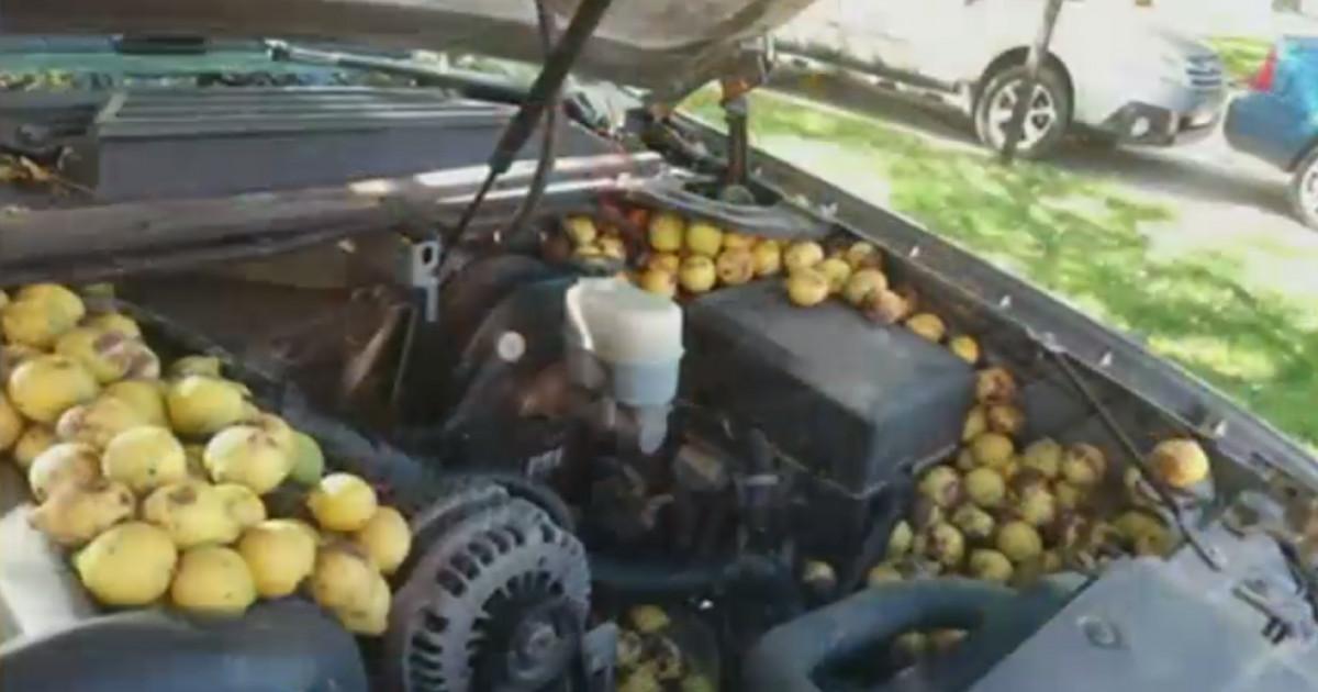 """VIDEO. Compartimentul motor al mașinii unui american, transformat în """"cămară"""" de o veveriță"""