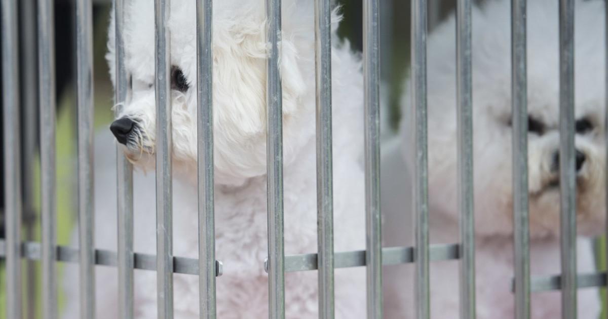 15 câini cumpărați din România riscă să fie eutanasiați în Suedia